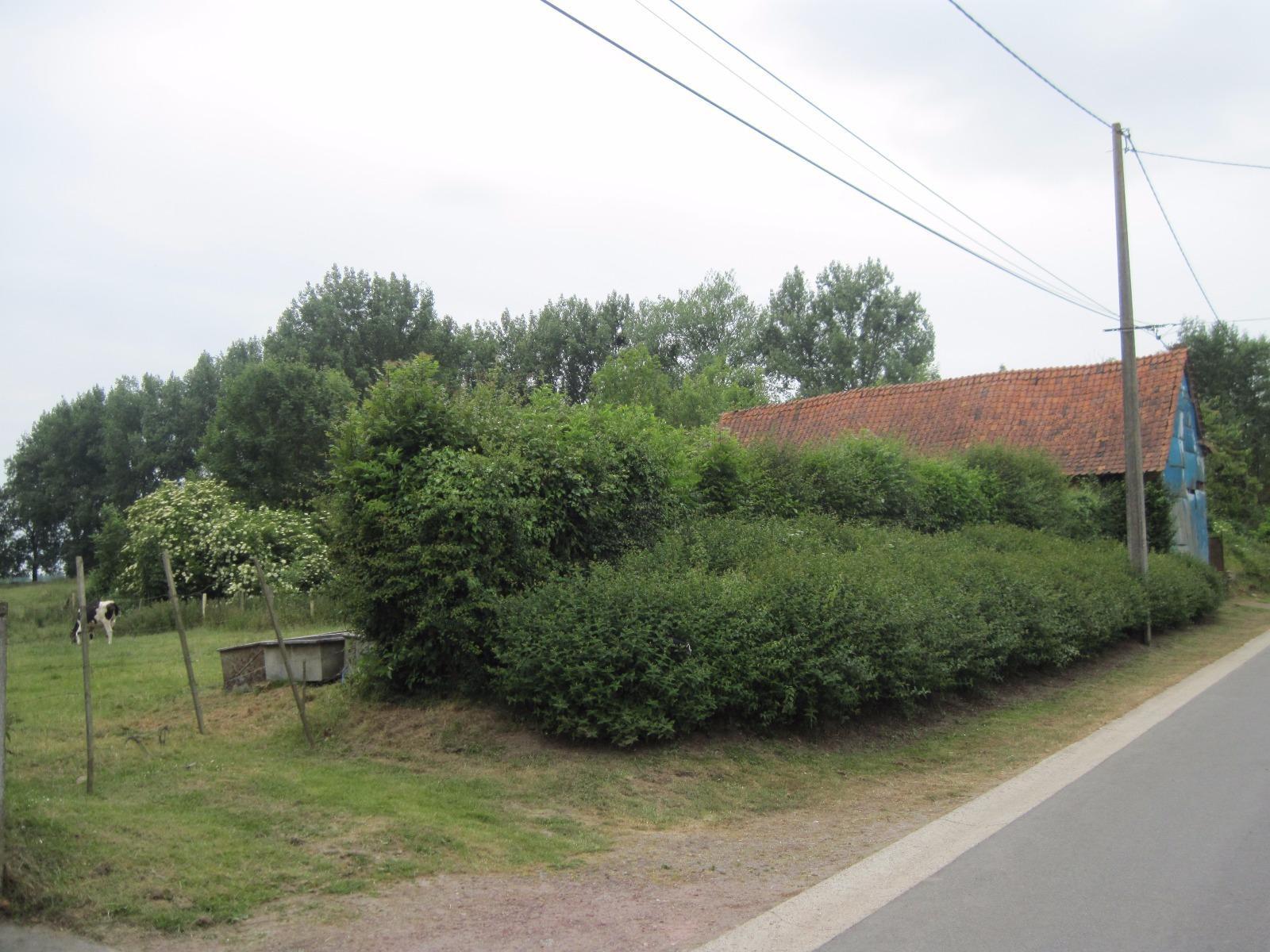 Offres de vente Terrain Buire-au-Bois (62390)